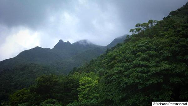 el_yunque_forest